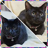 Adopt A Pet :: Belle and Beau - Staten Island, NY