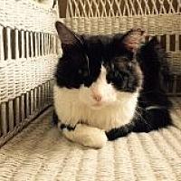 Adopt A Pet :: Pookie - Delmont, PA