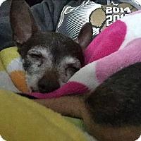 Adopt A Pet :: Francine ( Frankie) - Plainfield, IL