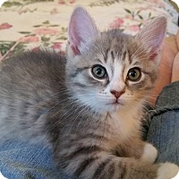 Adopt A Pet :: Aspen - Ocala, FL