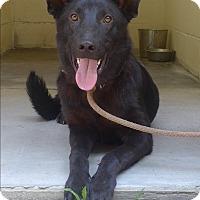 Adopt A Pet :: Vidro - Manning, SC