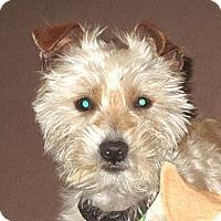 Adopt A Pet :: Taz - Forest Ranch, CA
