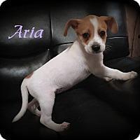 Adopt A Pet :: Aria - Denver, NC