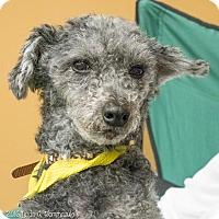 Adopt A Pet :: Chester - Loudonville, NY
