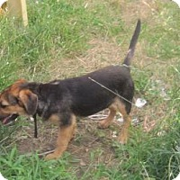 Adopt A Pet :: shyla - New palestine, IN