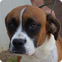 Adopt A Pet :: Spirit (URGENT) - Salem, MA