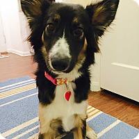 Adopt A Pet :: Farrah - Los Angeles, CA