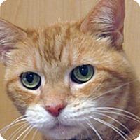Adopt A Pet :: Pumpkin - Wildomar, CA