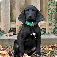 Adopt A Pet :: Tucker - Morganville, NJ