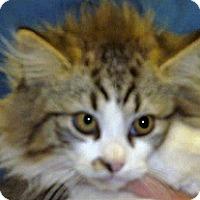 Adopt A Pet :: Sparky - Wildomar, CA