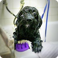 Adopt A Pet :: Slater - Casa Grande, AZ