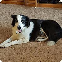 Adopt A Pet :: Lizzy - Allen, TX