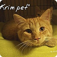 Adopt A Pet :: Krimpet - Ocean City, NJ