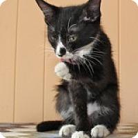 Adopt A Pet :: Tony - Atlanta, GA