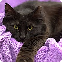 Adopt A Pet :: BayeBaye - Alexandria, VA