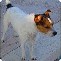 Adopt A Pet :: EDDIE - Scottsdale, AZ