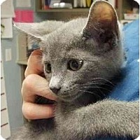 Adopt A Pet :: Olivia - Maywood, NJ