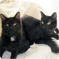 Adopt A Pet :: Brothers Will Smith&Tommy Lee - Chicago, IL
