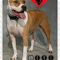 Adopt A Pet :: Levi - Cincinnati, OH