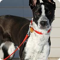 Adopt A Pet :: Betsy - Delano, MN