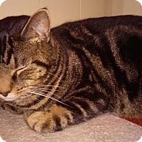 Adopt A Pet :: Magpie - Fairborn, OH