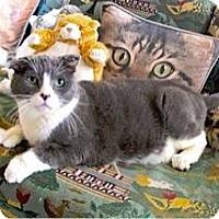 Adopt A Pet :: Dudley - Davis, CA