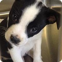 Adopt A Pet :: PANDA - CHICAGO, IL