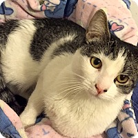 Adopt A Pet :: Bubbles - Addison, IL