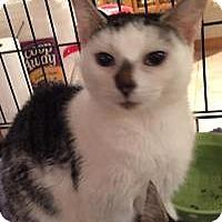 Adopt A Pet :: Gigi - East Hanover, NJ