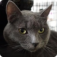 Adopt A Pet :: Azure - Redwood City, CA
