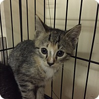 Adopt A Pet :: Hollis - Forest Hills, NY