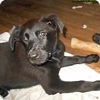 Adopt A Pet :: Roxanne - Houston, TX