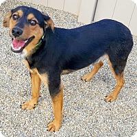 Adopt A Pet :: Alex - Bloomington, IL