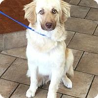 Adopt A Pet :: Shamrock - Oswego, IL