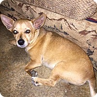 Chihuahua Mix Dog for adoption in CARISLE, Pennsylvania - Sport