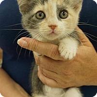 Adopt A Pet :: Elara - Wauconda, IL