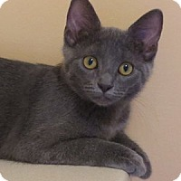 Adopt A Pet :: Dawn - Batavia, NY