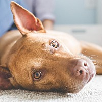 Adopt A Pet :: Fern (COURTESY POST) - Baltimore, MD