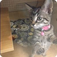 Adopt A Pet :: Star - El Dorado Hills, CA
