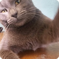 Adopt A Pet :: Blue - Ocala, FL