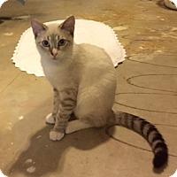 Adopt A Pet :: Tommy - McKinney, TX