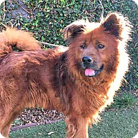 Adopt A Pet :: Brazil - Eastsound, WA