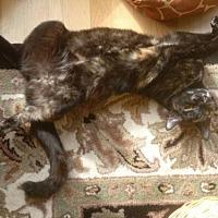 Adopt A Pet :: Annie - Fayetteville, GA