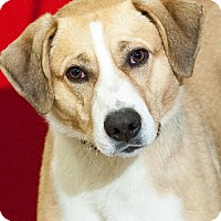 Adopt A Pet :: otis - Johnson City, TN