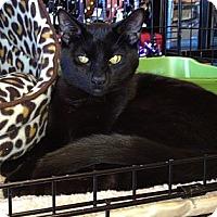Adopt A Pet :: Checkers & Poppy - Horsham, PA