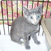 Adopt A Pet :: Chips - Colmar, PA