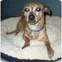 Adopt A Pet :: Hercules - Palmyra, WI