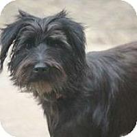 Adopt A Pet :: Mandisa - Austin, TX