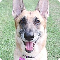 Adopt A Pet :: Lulubelle - Richmond, VA