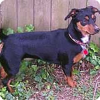 Adopt A Pet :: Ivy - Nashville, TN